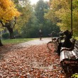 Stock Photo: Park in fall time