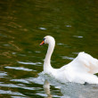 Young swan — Stock Photo #14177128