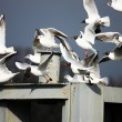 Stock Photo: Cute gulls