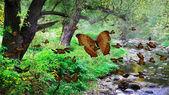 Mountainous creek — Stock Photo