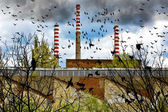 Birds near factory — Stockfoto