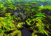 Amazon river — Stock Photo