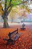 Senior koppel in het park — Stockfoto