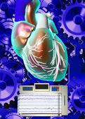 Human heart model — Stock Photo