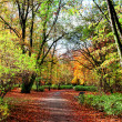 Park in fall time — Stock Photo #14869255