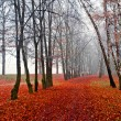 Stock Photo: November fog in park