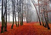 November fog in park — Stock Photo