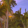 Stock Video: Tropical paradise