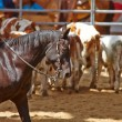 Rodeo competition is about to begin — Stock Photo #18137099
