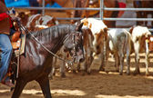 Rodeo competition is about to begin — Stock Photo