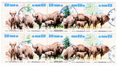 Bisons on Polish vintage postage stamp, — Stock Photo