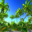 Hawaiian paradise — Stock Photo #19751709