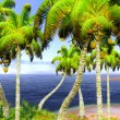 Hawaiian paradise — Stock Photo #19756971