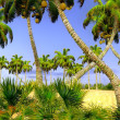 Hawaiian paradise — Stock Photo #19760869