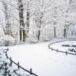 Park in winter time — Stock Photo #20264101