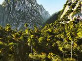 Tropical landscape — Stock Photo