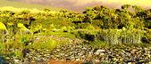 Siberian landscape — Stock Photo