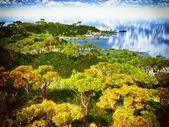 Alder forest — Stock Photo