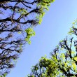 Stock Photo: Tree canopy