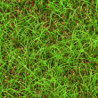 Stock Photo: Grassy background