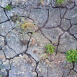 Crackled soil — Stock Photo