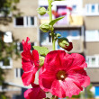 Urban flower — Stock Photo