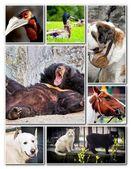 Animal collage — Stock Photo