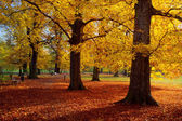 Park in autumn time — Stock Photo