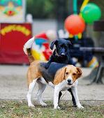 2 匹の犬 — ストック写真
