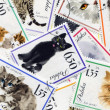 Feline composition made of postage stamps — Stock Photo #37432453