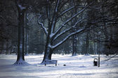Wintry park — Stock Photo