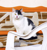 Cute cat sitting on  sofa — ストック写真