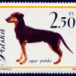 hond op Pools postmark — Stockfoto #44797091