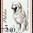 Dog on Polish postmark — 图库照片