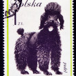 hond op Pools postmark — Stockfoto #44797115