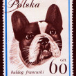 hond op Pools postmark — Stockfoto #44797143