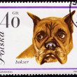 Dog on Polish postmark — Stock fotografie