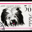 hond op Pools postmark — Stockfoto #44797161