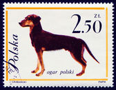 Hond op pools postmark — Stockfoto