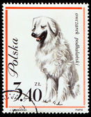 Dog on Polish postmark — Stockfoto