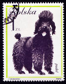 Dog on Polish postmark — Photo