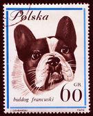 Cão em carimbo polonês — Foto Stock
