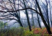 árboles de niebla — Foto de Stock