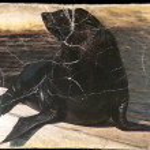 The northern fur seal Callorhinus ursinus — Zdjęcie stockowe