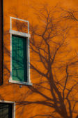 Leafless tree casts shadow on vivid orange wall and green window — Stock Photo