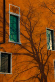 Leafless tree casts shadow on vivid orange wall — Stock Photo
