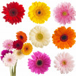 Flower of gerber daisy collection — Stock Photo #23876493