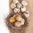 Nest with quail eggs on a canvas — Stock Photo