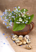 Quail eggs and flowers — Stock Photo