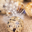 Quail eggs and feather lie on a cloth — Stock Photo